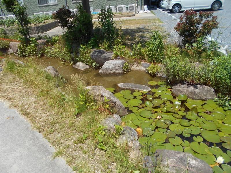 DSCN04791 - 四日市ケアホームの自慢の中庭🐟