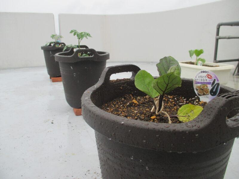 IMG 0004 800x600 - 菜園はじめました。